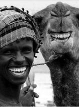 camel laugh