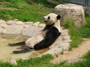 animals_relaxing_11