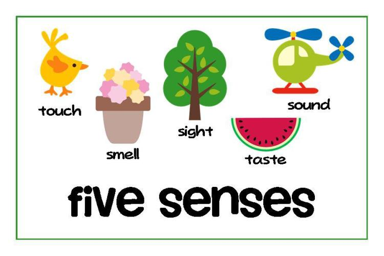 5-senses-clipart-9izr7bzie
