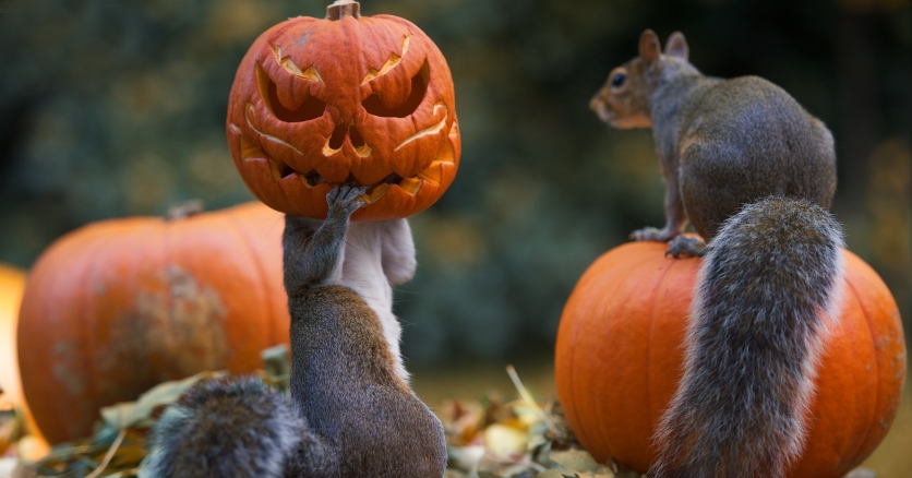squirrel-pumpkin-funny-photography-max-ellis-fb