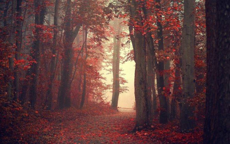 223482-landscape-nature-fall-trees-mist-path-red-leaves-forest-red_leaves-748x468